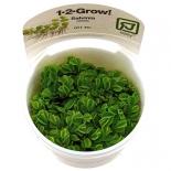 1-2-Grow! Растения