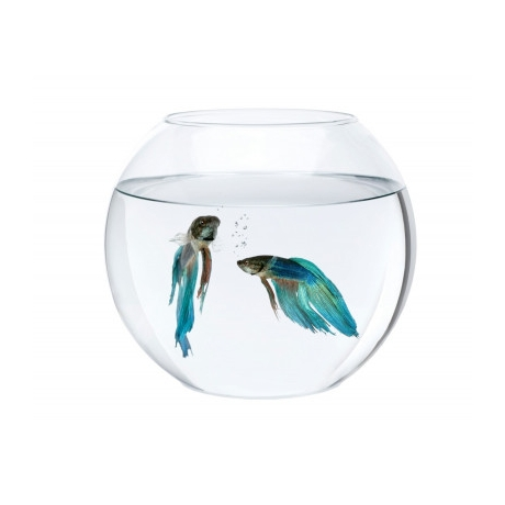 Aquael Ümmargune akvaarium, 5.5l